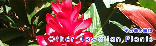 その他のハワイアン植物柄のパウスカートを探す